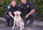 How To Become An Animal Control Officer